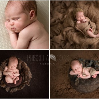 Harrison 13 days castle hill newborn photographer